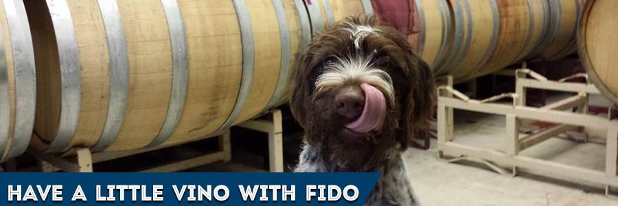 dog at vineyard