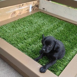 Lawn for Puppies