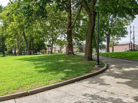 bayside park trees
