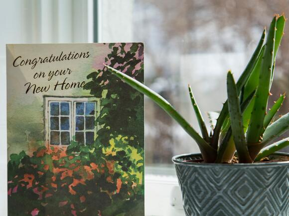 card and aloe plant