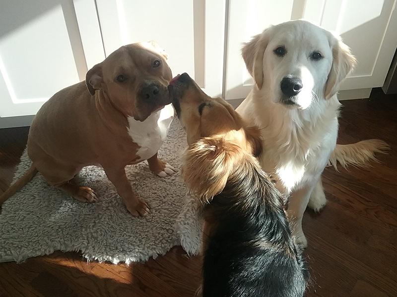 Oakland, Penelope and Jett