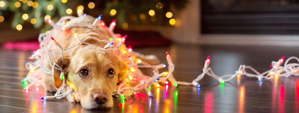 Pet-Friendly Holiday Decorating Tips